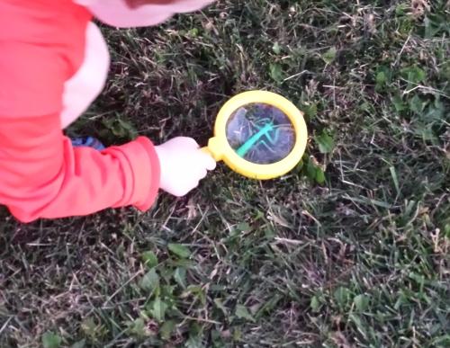 Beginning Sounds Alphabet Creepy Crawlies Hunt magnifying glass
