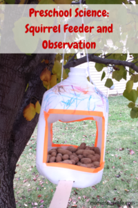 Preschool Science: Nuts to You! Squirrel Feeder and Observation activity.