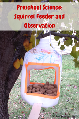 Nuts to You! Book Activity: Squirrel Feeder