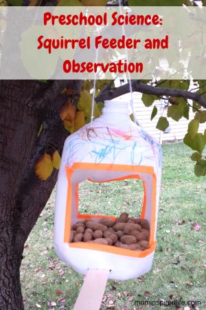 Nuts to You! Book Activity: Squirrel Feeder