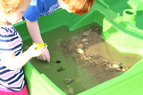 Kids of all ages will enjoy learning about the life cycle of a frog with this hands-on learning activity