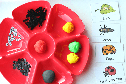 Use playdough to model the life cycle of ladybug