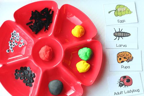 Use playdough to model the life cycle of ladybug