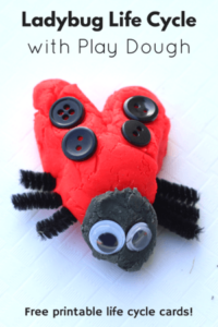Ladybug Life Cycle with Play Dough. Hands-on preschool science lesson.