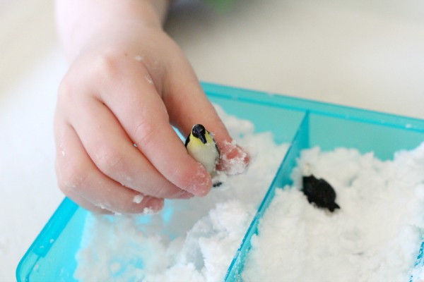 Penguins in the Arctic. A fun preschool science exploration.