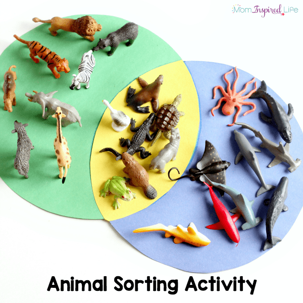 Animal sorting activity with a Venn diagram. A preschool math and science activity.