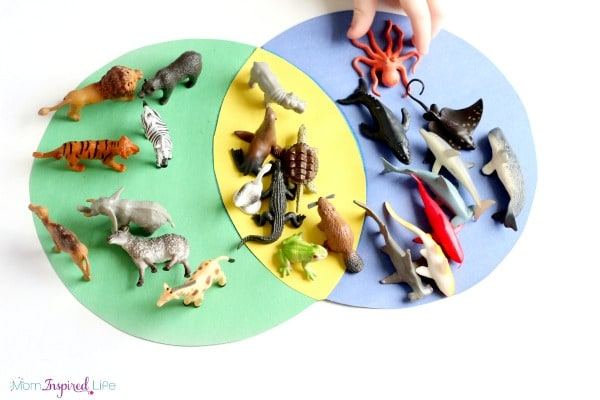 Sorting animals preschool science and math activity. Preschool STEM activity.