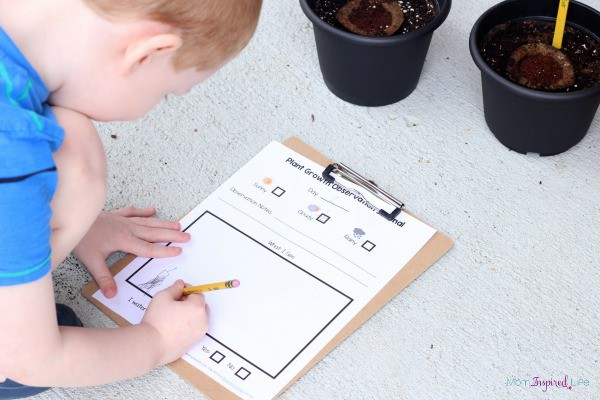 Plant growth observation sheet that is simple enough for preschoolers and young elementary students.