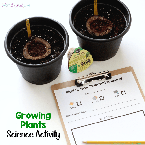 Plant growth science activity for young children. A fun and easy way to learn about growing plants!