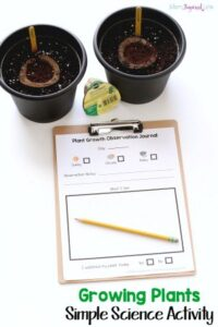 Growing Plants Science Activity