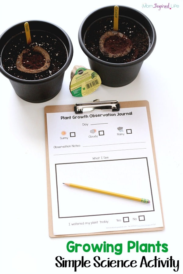 This growing plants science activity for kids is a easy and fun way for kids to learn to grow their own food and record any observations they see as they grow.