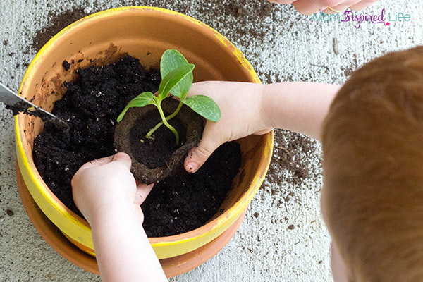 Planting vegetables with young children. A hands-on science activity for spring!