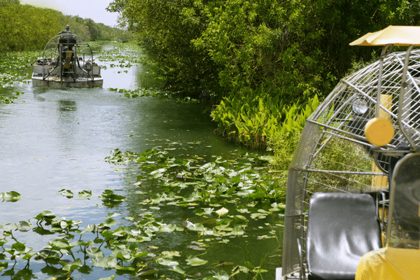 Florida Everglades is a great place to visit in winter!