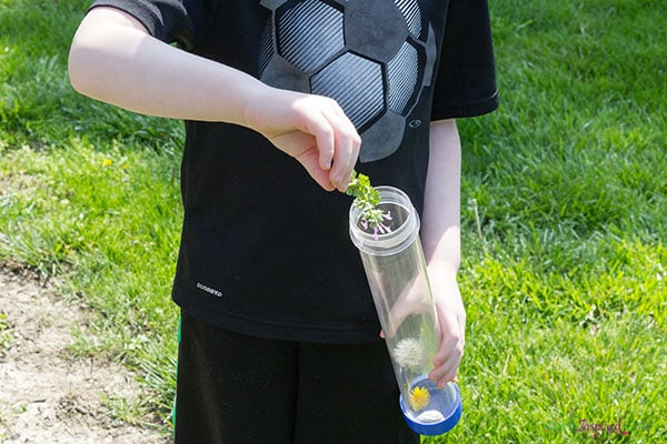 Nature activity for kids. Make your own discovery bottle!
