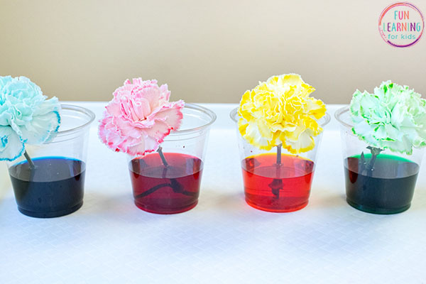 Magic flower science activity.