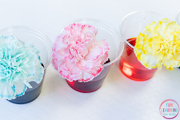 The kids will love this spring science experiment!