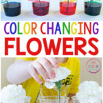 Color Changing Flowers Science Experiment