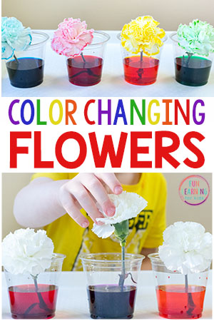 This color changing flowers science experiment is a fun spring science activity!