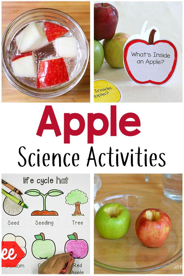 Fun apple theme science activities for preschoolers and kindergarten students.